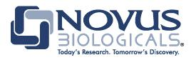 Novus Biologicals 相關產品