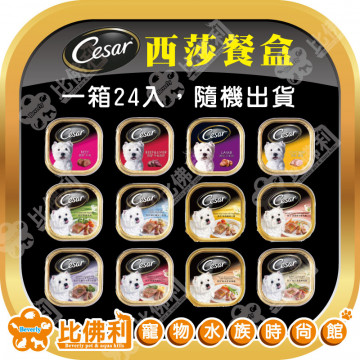 Cesar西莎系列餐盒 100g24入 口味隨機混搭