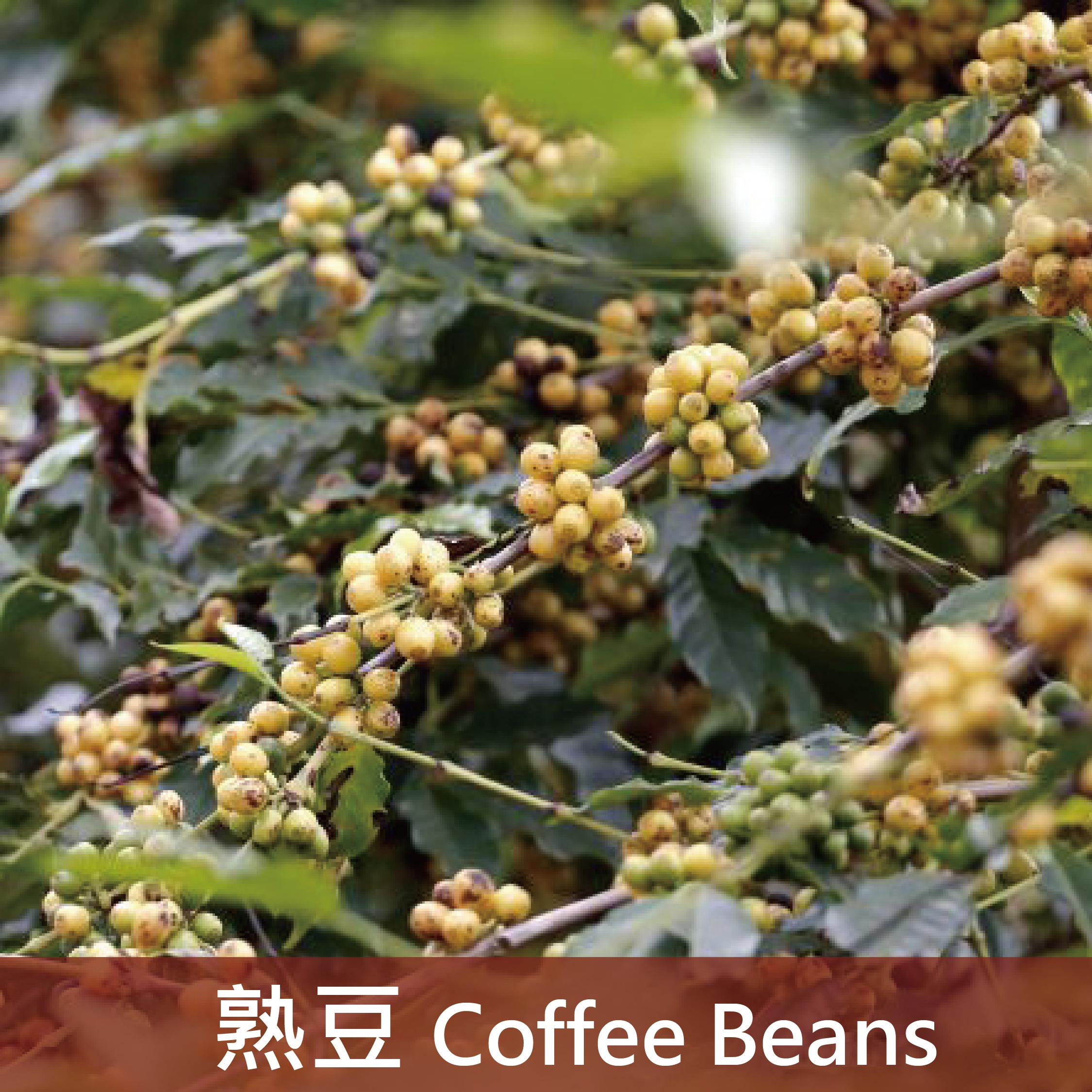 巴西 南米那斯咖啡(中焙3)