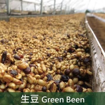 【生豆】哥斯大黎加 布蘭卡 奇里波山谷 里瓦斯人處理廠 奇里波美景莊園 百香蜜處理
