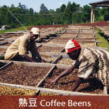 衣索比亞 日曬 古吉G1 夏奇索 魔魔拉莊園  74110&74112品種(極淺焙1)