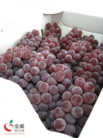 日本珍珠小葡萄