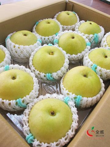 日本溫室鳥取二十世紀梨(12入/箱)