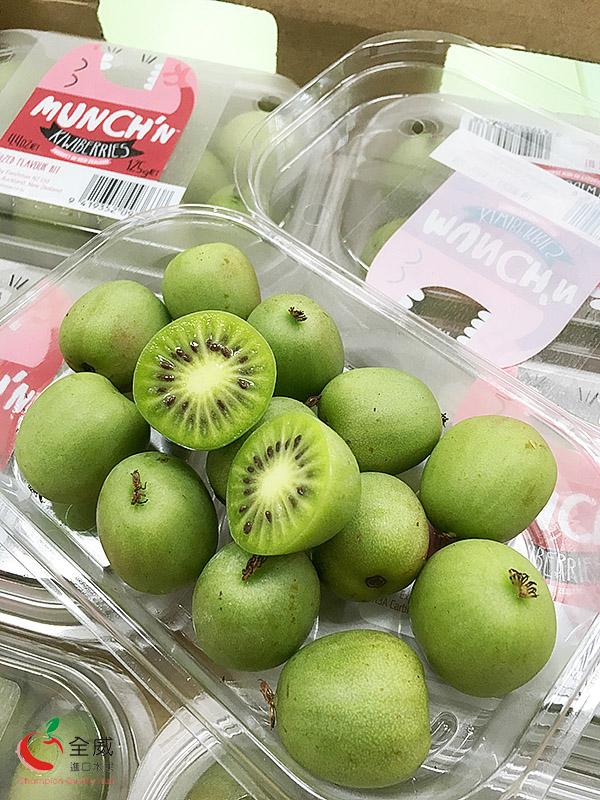 紐西蘭迷你奇異果(12盒),全世界最知名的奇異果品牌