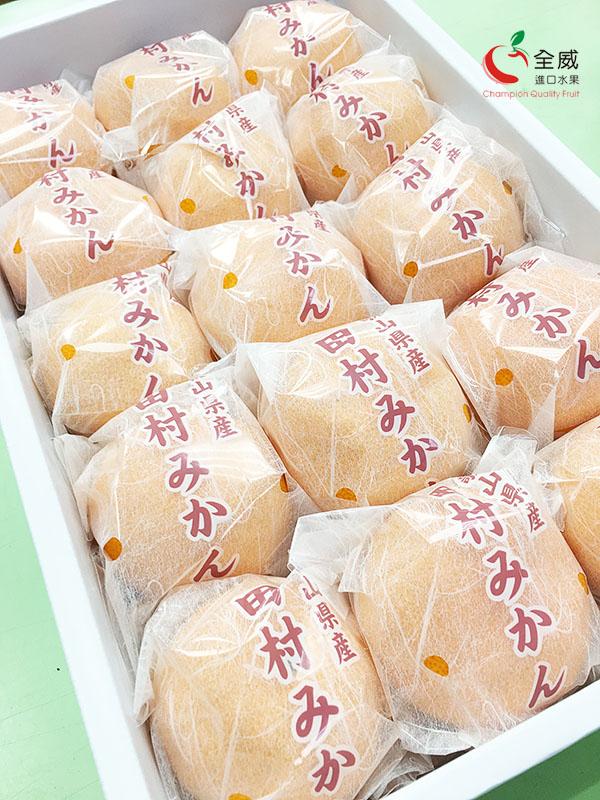 日本和歌山田村蜜柑(12~15入/盒)