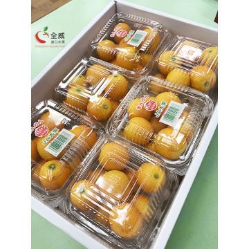 日本金桔禮盒(6小盒裝)