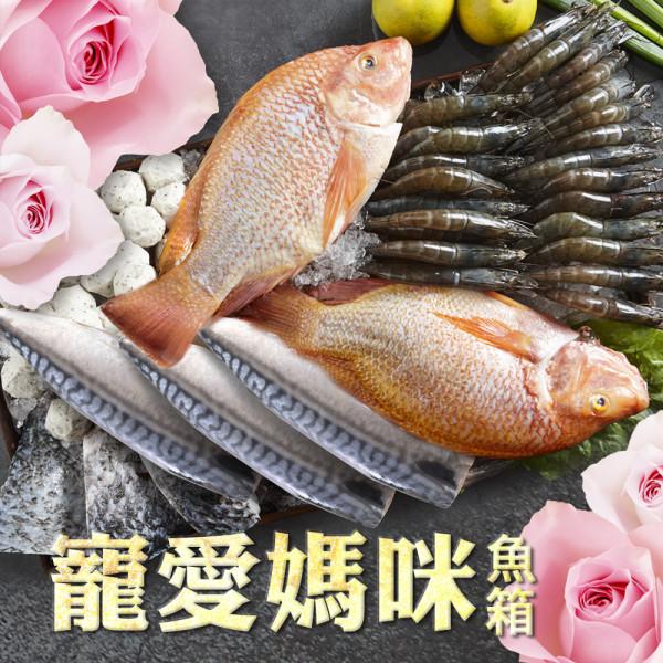 【Hi-Q fresh】寵愛媽咪魚箱
