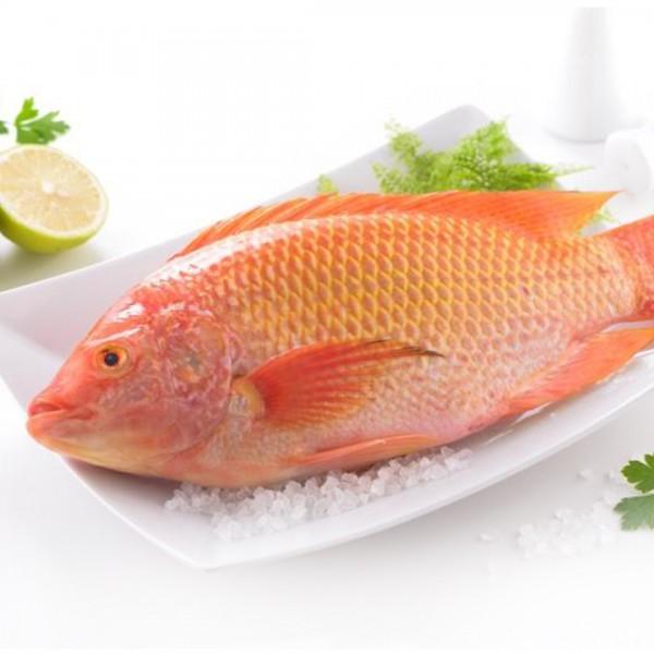 【Hi-Q fresh】海紅鯛 真空包裝(500g/尾)