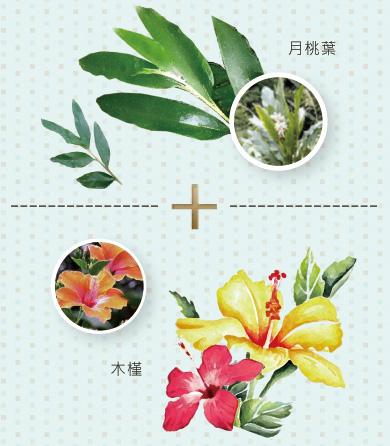 月桃、木槿、鎖水磁石、紅潤光澤、保水鎖水、透明水嫩、增強皮膚自然保水力