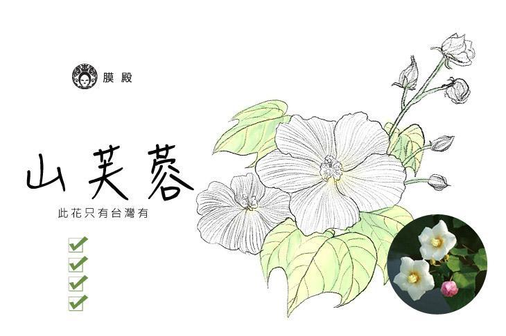 山芙蓉-一份源自台灣原住民排灣族 傳承200年的肌膚修護秘方...延緩肌齡 緊顏煥采 提高抗氧化 維持青春活力
