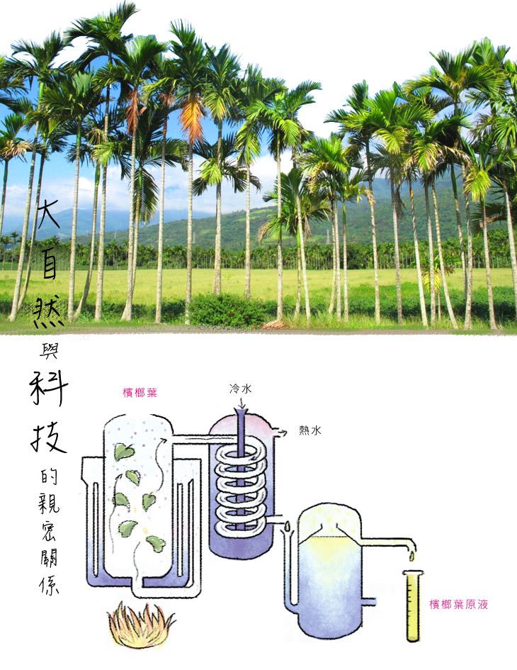 檳榔葉大自然與科技的親密關係-嚴選台灣棲蘭地區 有機土壤培育栽種