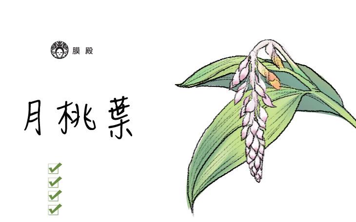 月桃葉-來自土地的能量,台灣原生青草藥