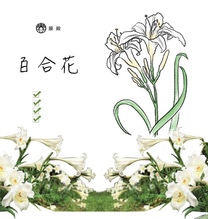 百合花-台灣代表,生命力的象徵