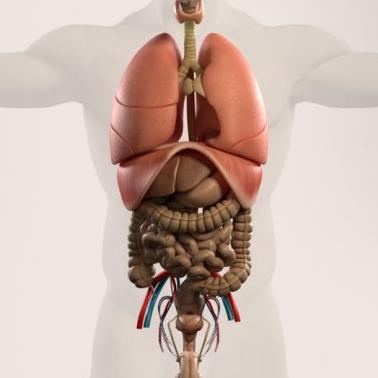 真正的有價有市 人體器官黑市價格曝光