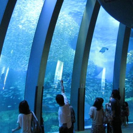 桃園超好玩!日本「橫濱八景島」水族館2020年登場