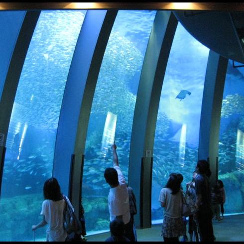 <p>桃園超好玩!日本「橫濱八景島」水族館2020年登場</p>