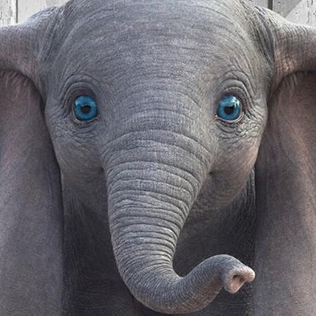 <p>超期待的迪士尼經典動畫《小飛象》真人版 青年節上映</p>