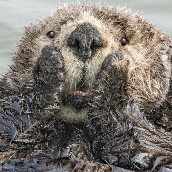大自然超可愛爆笑系列!《搞笑野生動物攝影獎》讓人會心一笑!