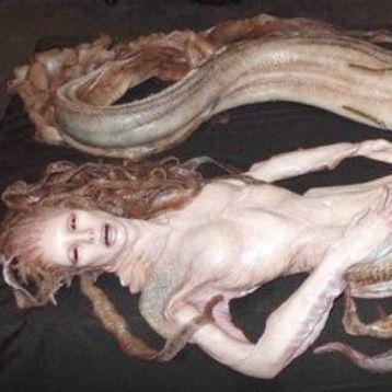 證據顯示美人魚真實存在 不過其實他們並不美